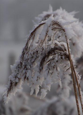 Winter bescherming